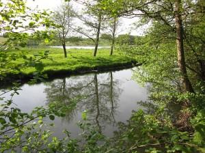 Odense Å med søen - Søparken.